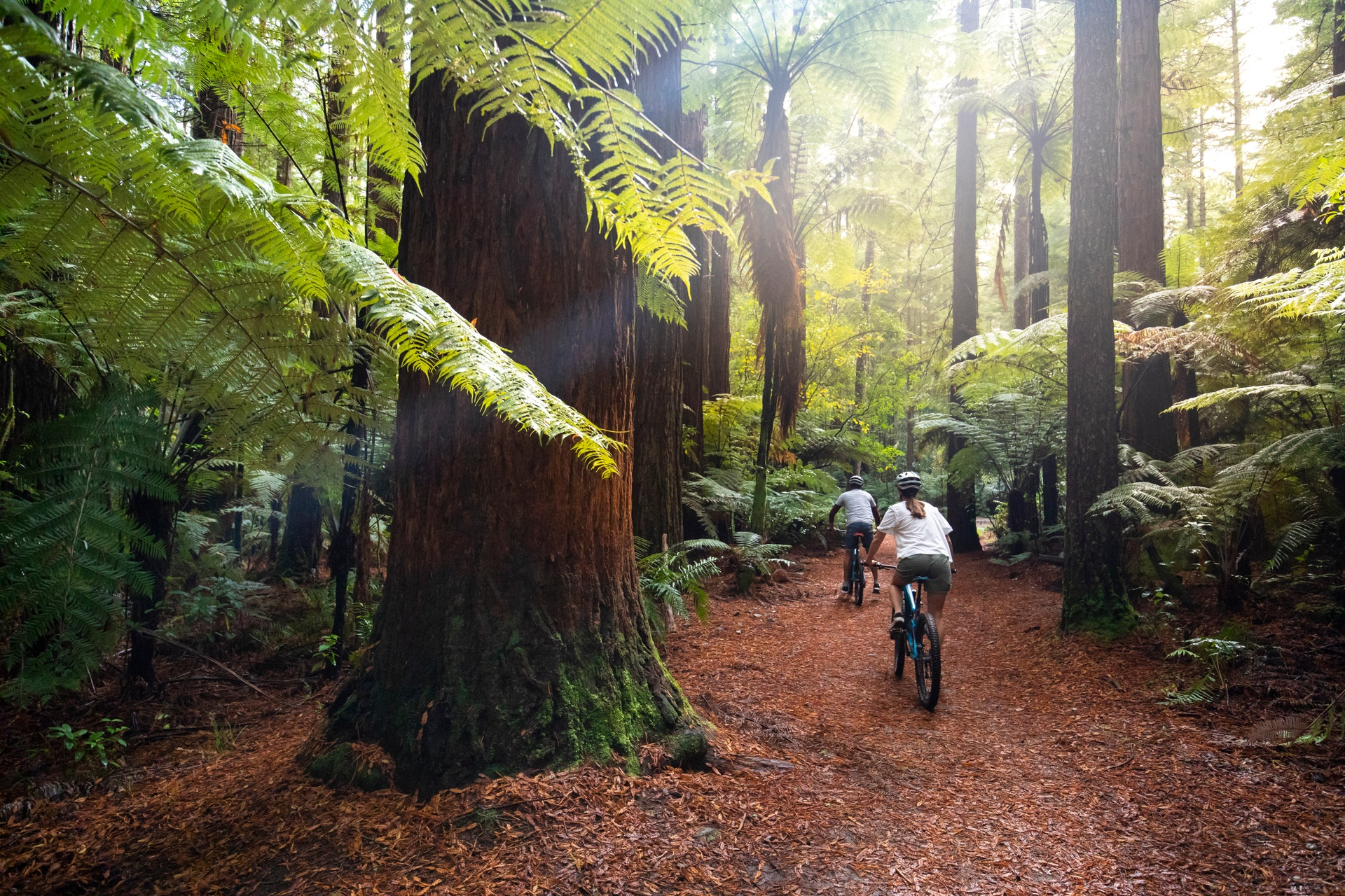 Redwoods Forest Rotorua Velocity Valley